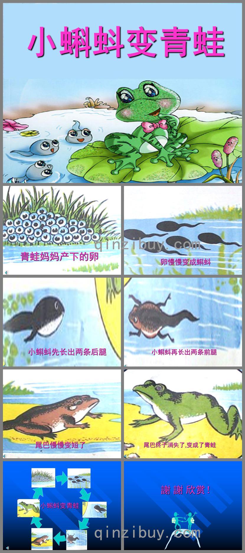 幼儿园科学小蝌蚪变青蛙PPT课件