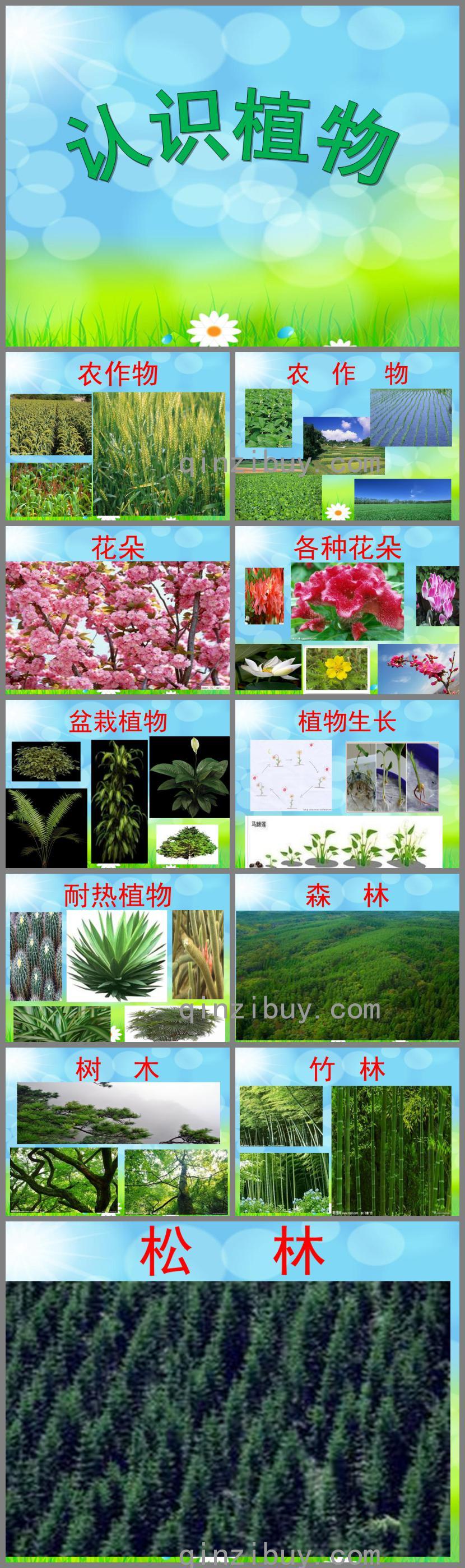 幼儿园认识植物PPT课件