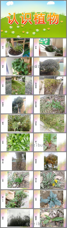 大班语言科学认识植物PPT课件