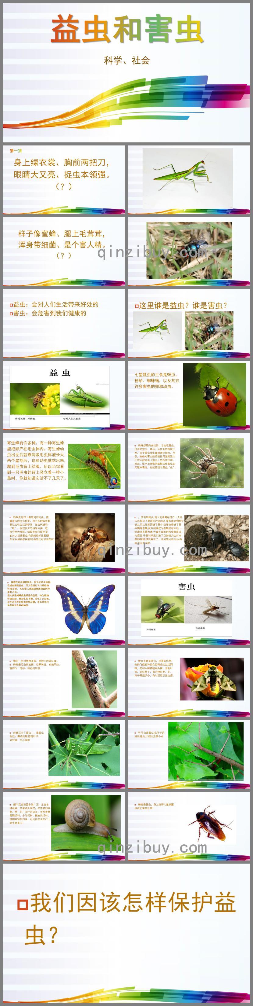中班科学益虫和害虫PPT课件