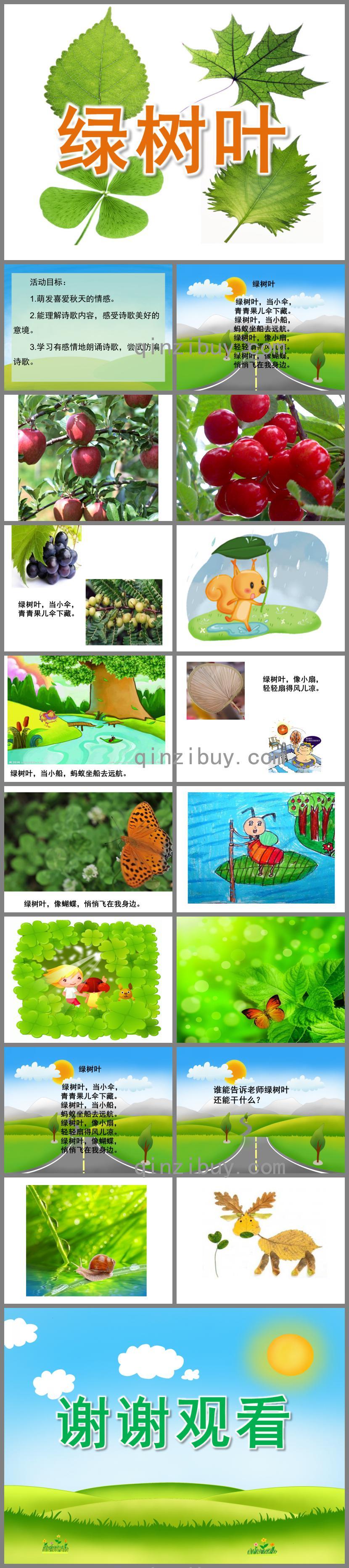 中班语言活动绿树叶PPT课件