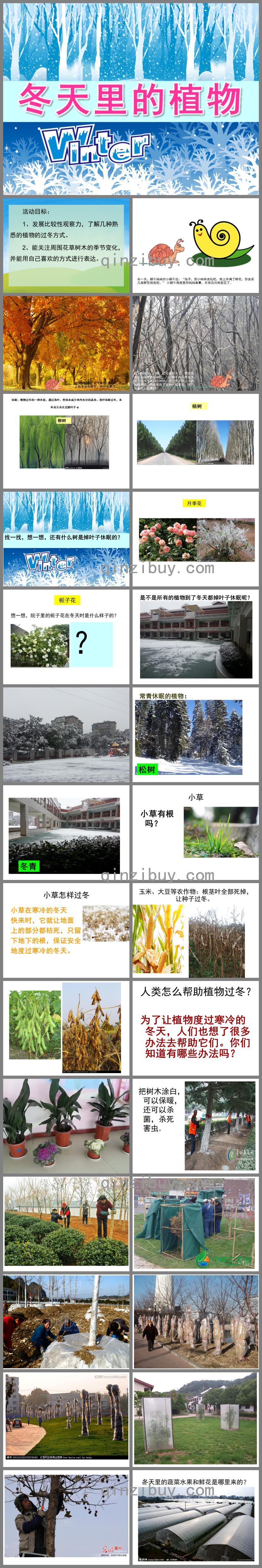 大班科学冬天里的植物PPT课件
