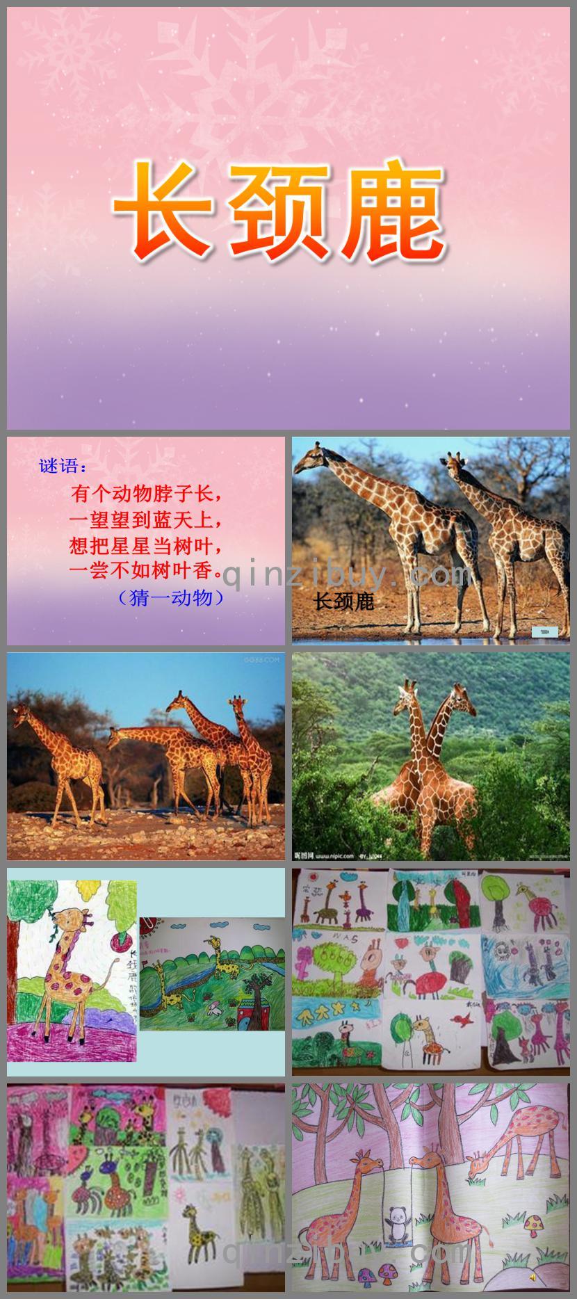 大班绘画长颈鹿PPT课件