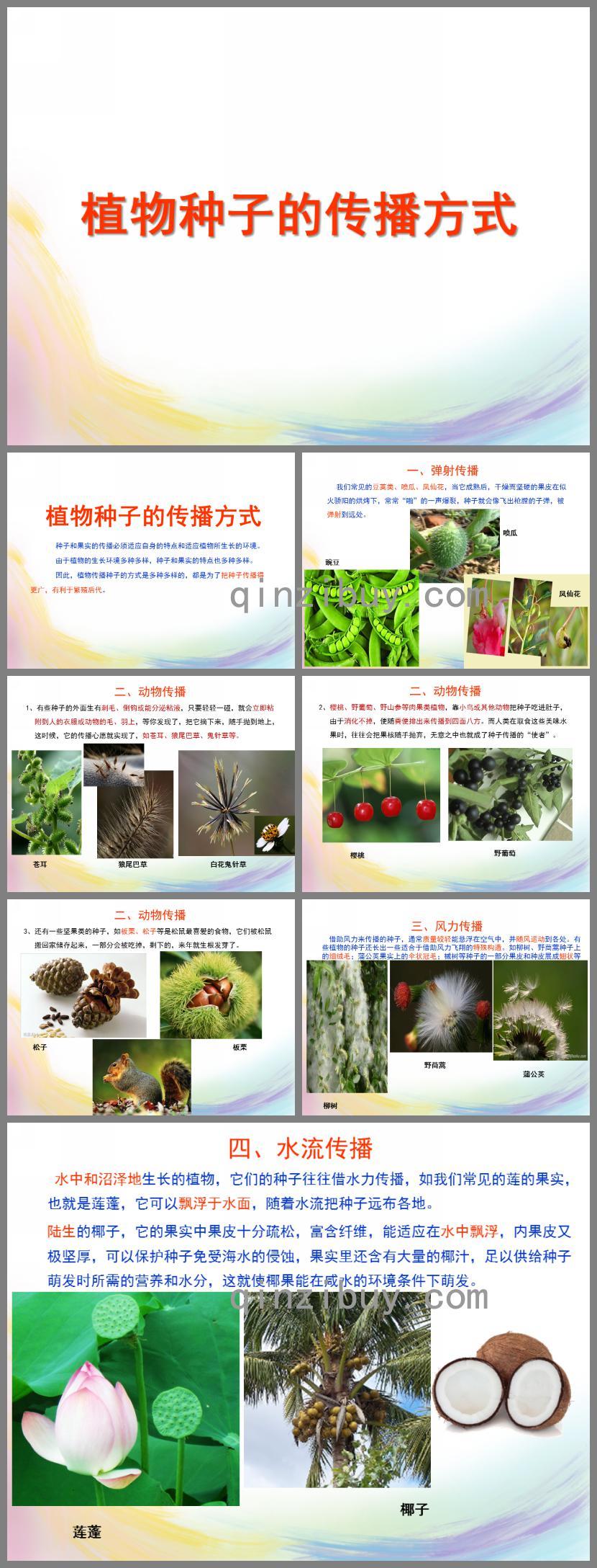 幼儿园植物种子的传播方式PPT课件