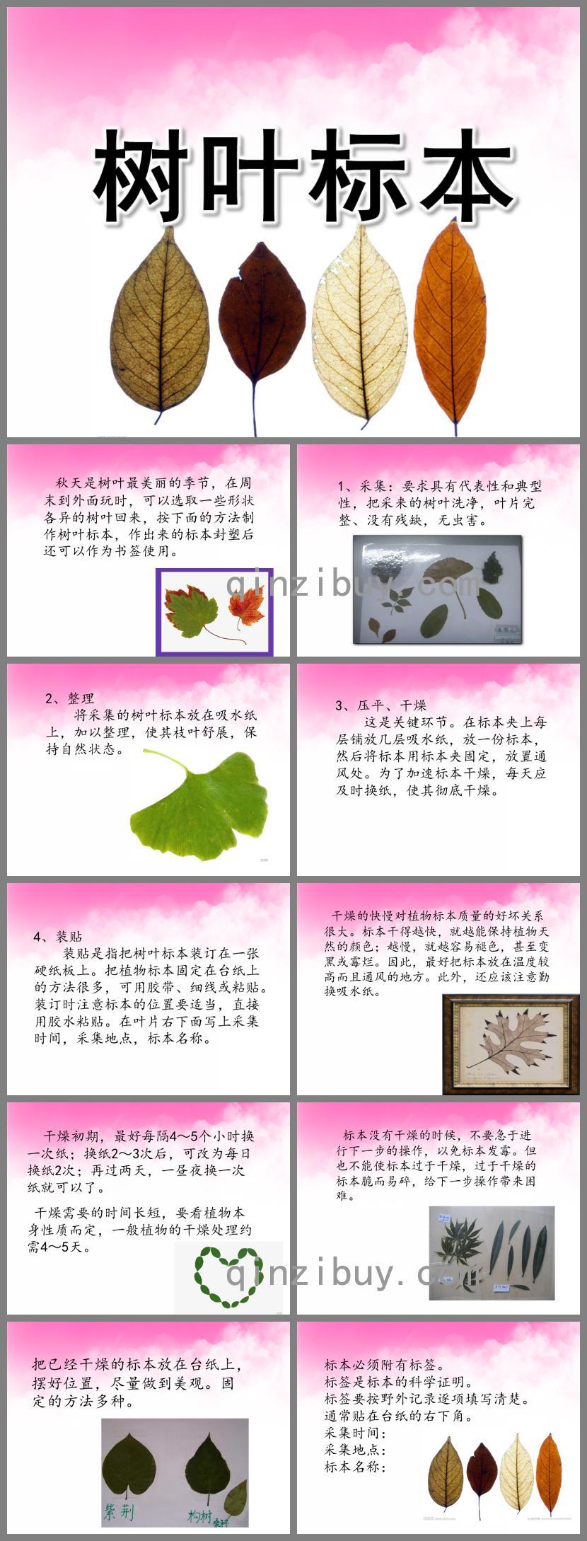 中班科学树叶标本PPT课件