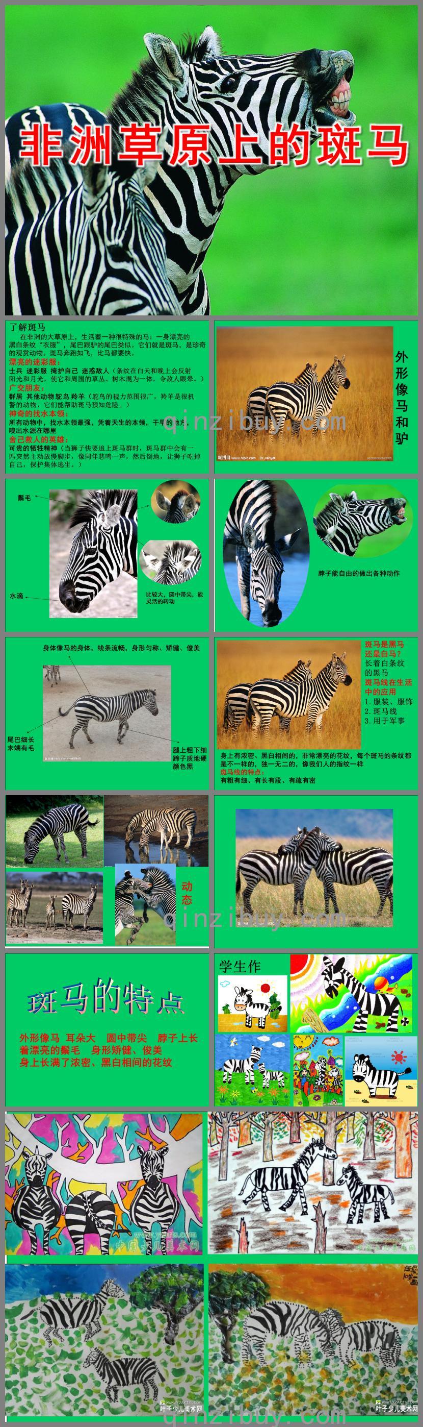 大班美术非洲草原上的斑马PPT课件