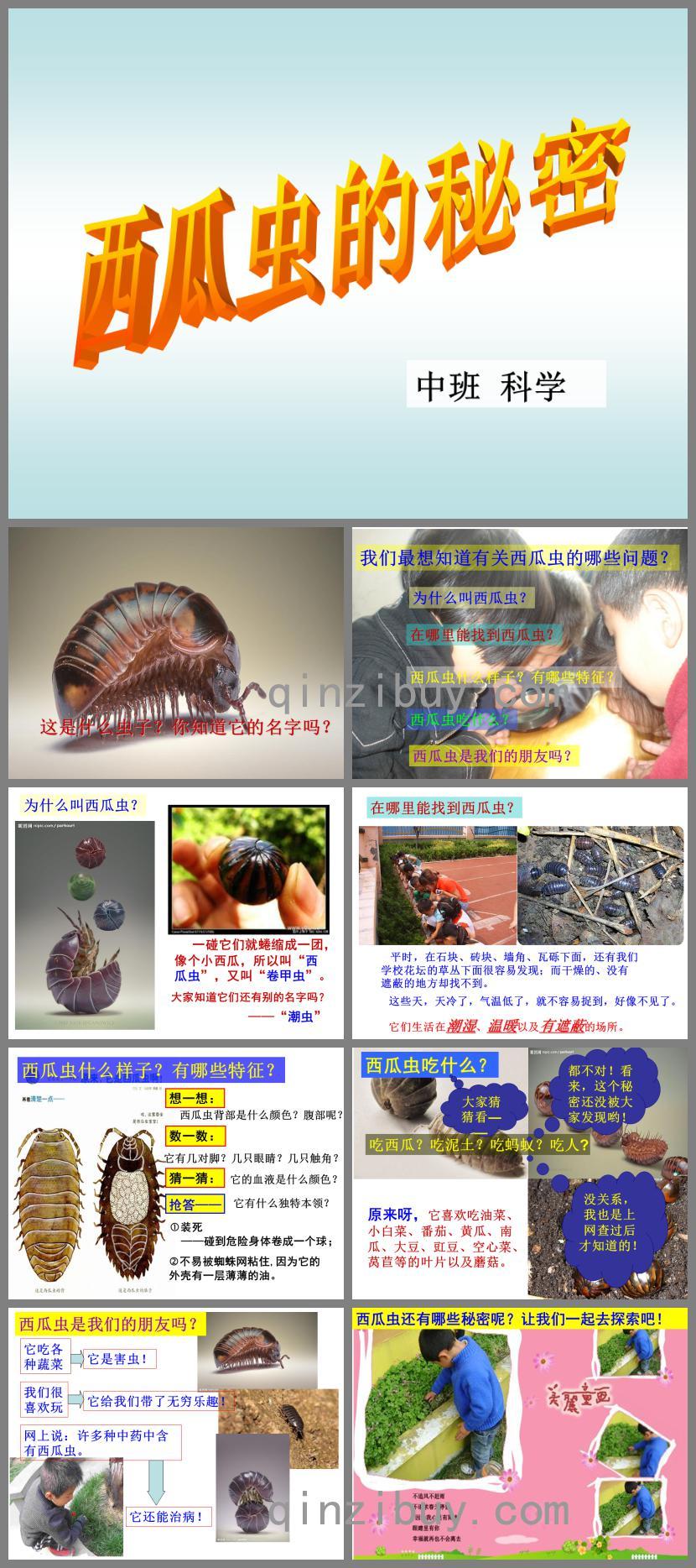 中班科学西瓜虫的秘密PPT课件
