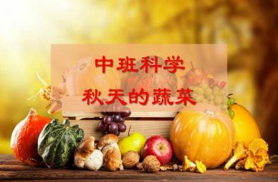 中班科学秋天的蔬菜PPT课件
