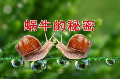 中班科学蜗牛的秘密PPT课件教案