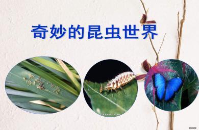 奇妙的昆虫世界PPT课件
