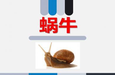 中班认识蜗牛PPT课件教案图片