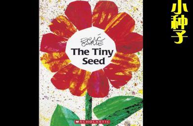 小种子PPT课件教案