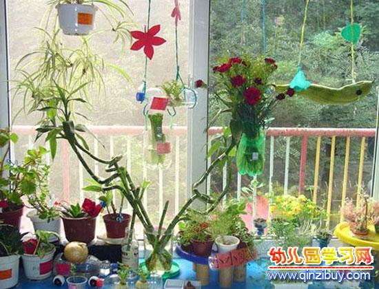 幼儿园区角环境布置:植物角3