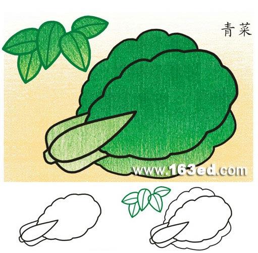蔬菜简笔画 青菜