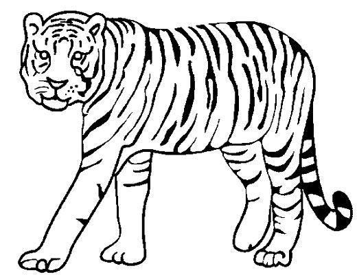 3 - Image dessin tigre ...