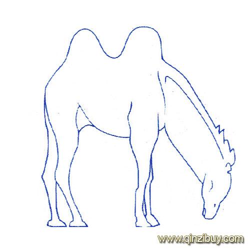 动物简笔画 一只骆驼10