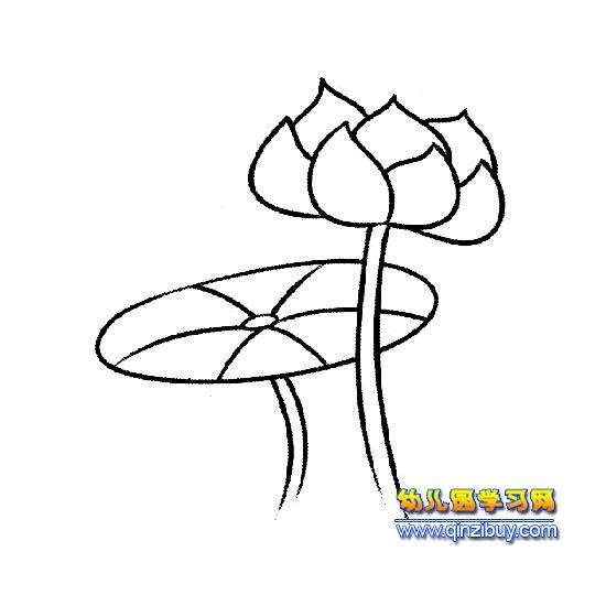 含苞待放的荷花简笔画1—幼儿园学习网