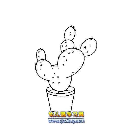 盆景仙人球简笔画4—幼儿园教案网