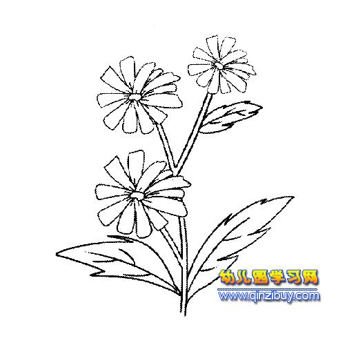 植物花卉简笔画:菊花3—幼儿园学习网