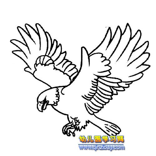 老鹰简笔画动物