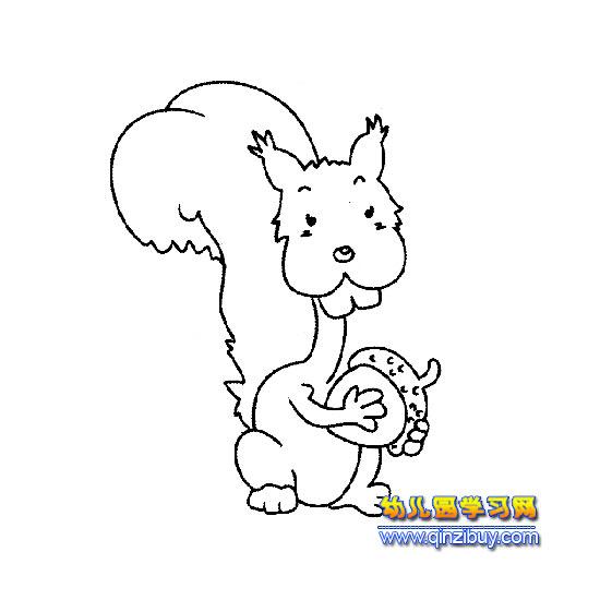 吃松子的小松鼠简笔画2—幼儿园学习网