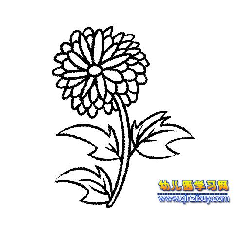 简笔画 一朵菊花2