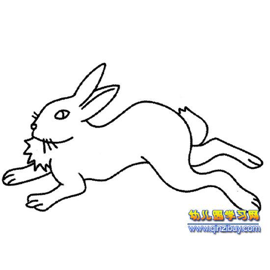 奔跑的小白兔(简笔画)1—幼儿园学习网
