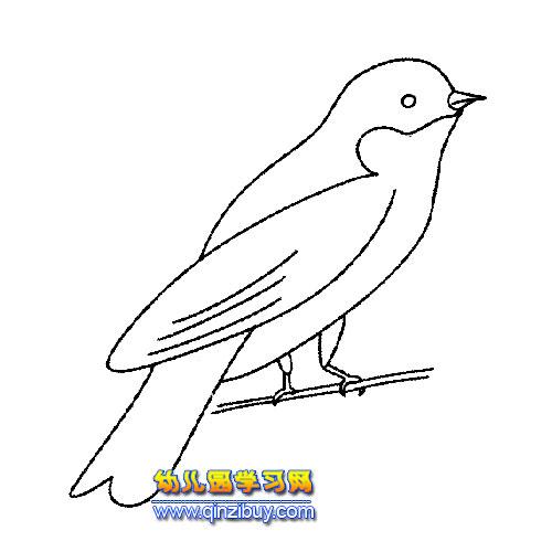 落在树枝的画眉鸟简笔画5