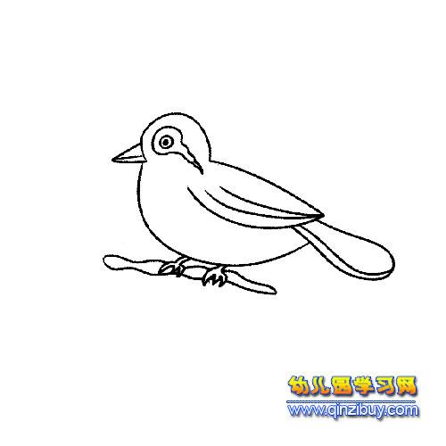 画眉鸟 鸟类简笔画 4