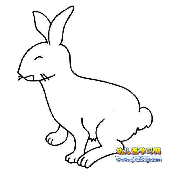 动物简笔画 小白兔3