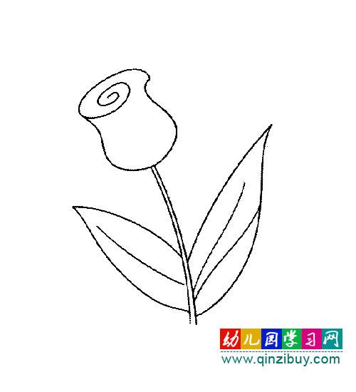 花卉简笔画:郁金香—幼儿园教案网