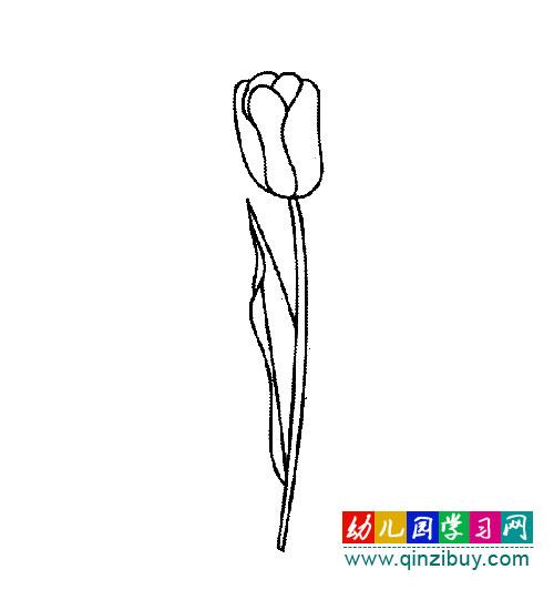 花卉简笔画 郁金香1