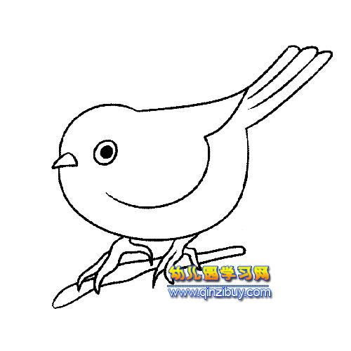 可爱的画眉鸟2 简笔画
