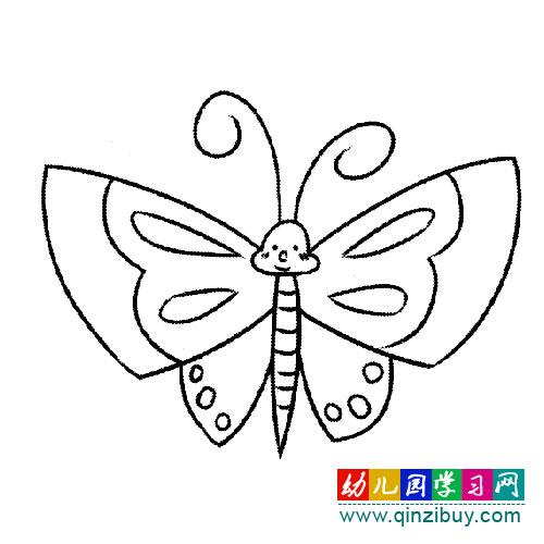 蝴蝶标本 简笔画