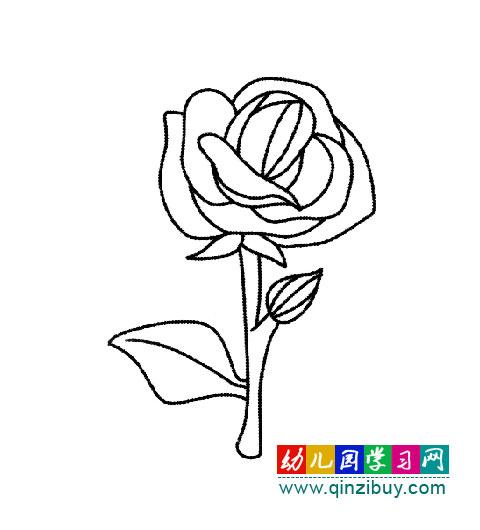 简笔画 鲜艳的玫瑰花