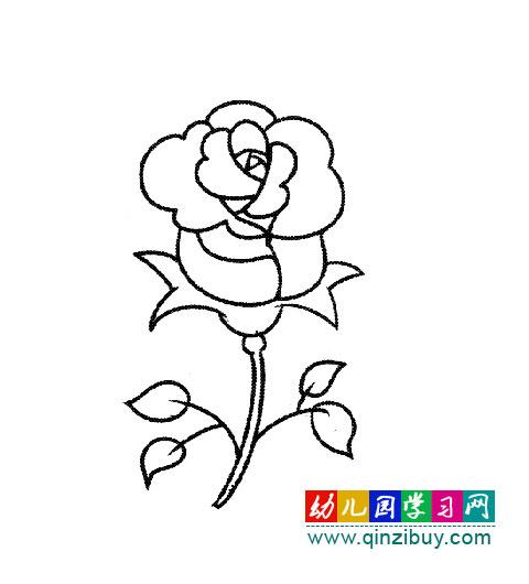 漂亮的玫瑰花(简笔画) 幼儿园学习网