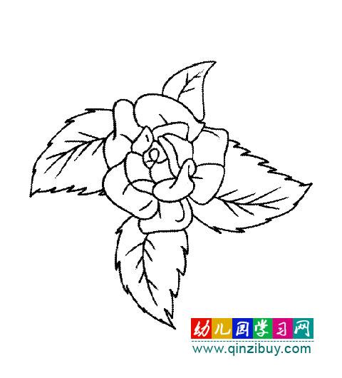 简笔画 一朵盛开的玫瑰花