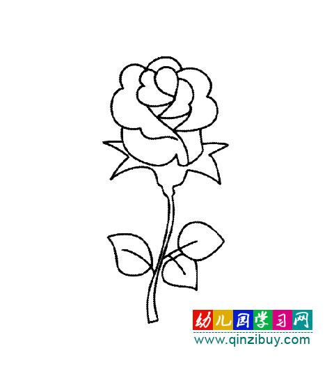 简笔画 一束玫瑰花
