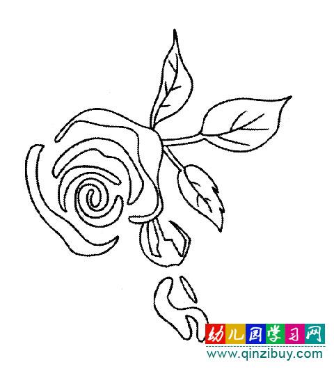 漂亮的玫瑰花 简笔画图片