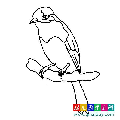 简笔画 :可爱的白头翁