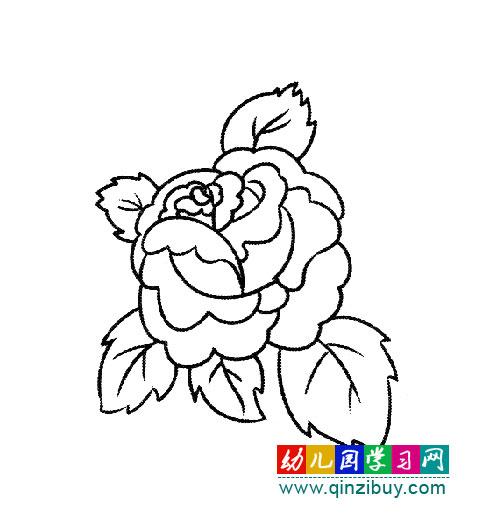 盛开的玫瑰花 简笔画