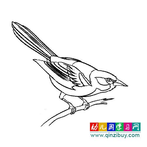 简笔画:准备起飞的黄鹂鸟—幼儿园教案网