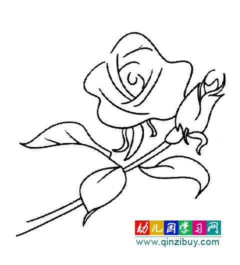 植物花卉简笔画 漂亮的玫瑰花