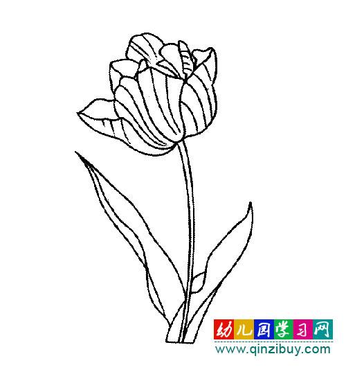 幼儿园学习网 简笔画 植物花卉 >> 正文    编辑:小画师