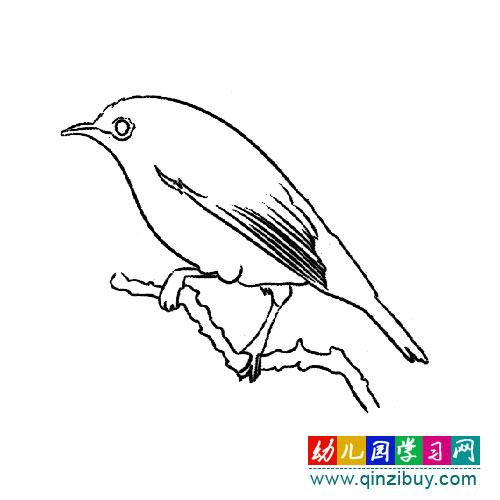 鸟类简笔画:安静的