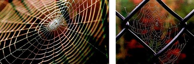 幼儿园中班画画教案设计:蜘蛛先生的家