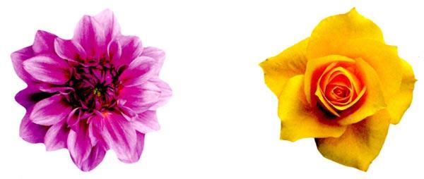 幼儿园中班美术活动设计:花儿朵朵—幼儿园中班教案