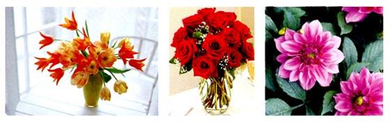 幼儿园中班美术活动设计:花儿朵朵