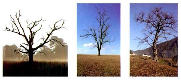 幼儿园中班美术教案设计:冬天里的树